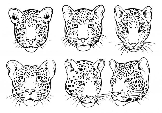 ヒョウの顔のセットです。野生動物の肖像画のコレクション。ベクトルイラスト。