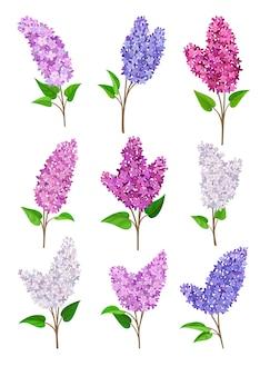 さまざまな色のライラックの花のセット