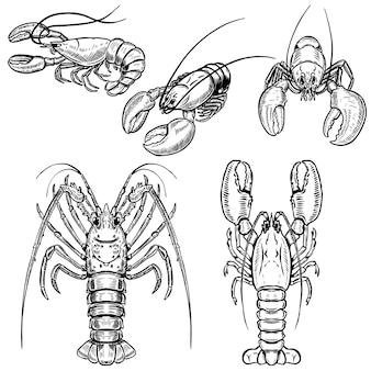 Набор иллюстраций омаров на белом фоне. элементы для плаката, меню. иллюстрация