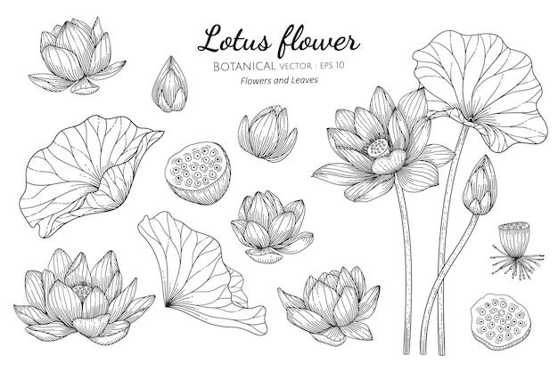 손으로 그린 식물 그림에서 연꽃과 잎의 집합