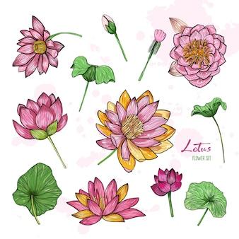 さまざまなビューで蓮の花のセット。花が咲き、つぼみと葉。手描きのカラフルなイラスト集。