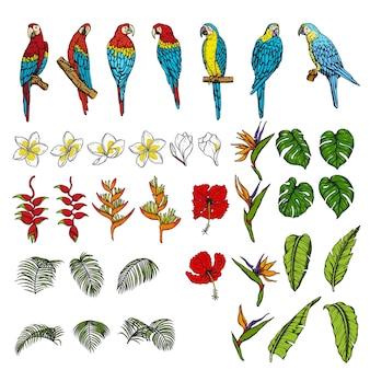 Набор ара с тропическими листьями и цветами Premium векторы