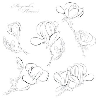 ラインアートスタイルで白い背景のマグノリアの花のセット
