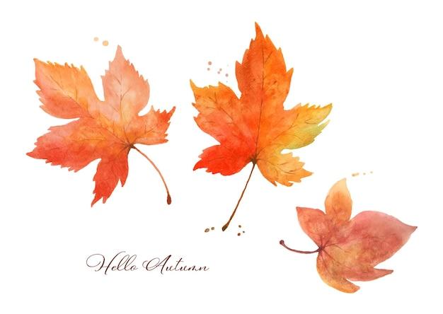 단풍나무 잎 수채화 손으로 그린 흰색 배경에 고립의 집합입니다. 가을 축제, 인사말 카드, 초대장, 포스터 장식 디자인에 완벽한 그림입니다.