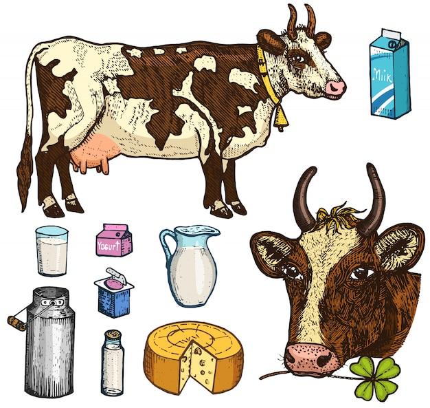 乳製品、乳製品、ヨーグルトとチーズ、アイスクリーム、ボトル、水差し、バター、ホイップミルクセーキのセット。牛、缶、国または素朴な農場、健康的な食事。古いスケッチで描かれた刻まれた手。