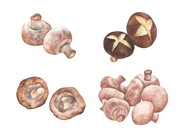 버섯 세트. 손으로 흰색 바탕에 수채화 그림을 그려.