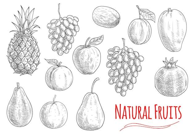 白で隔離される自然な果物のセット