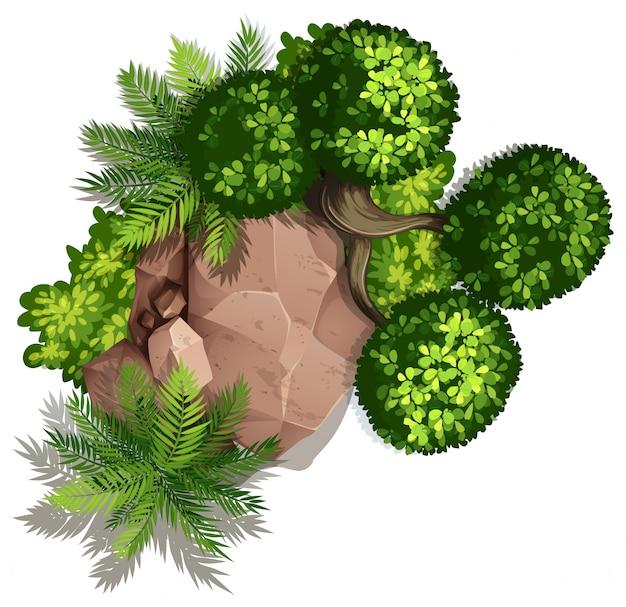 자연 바위와 식물의 세트