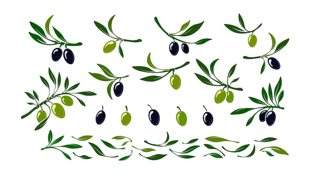 オリーブのセット黒と緑のマクロフルーツの葉