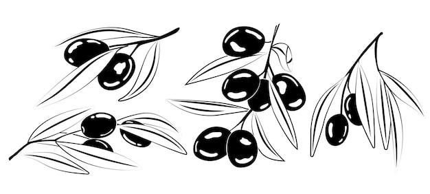 枝にオリーブのセット。シンプルな線形スタイルのイラスト。白い背景に分離