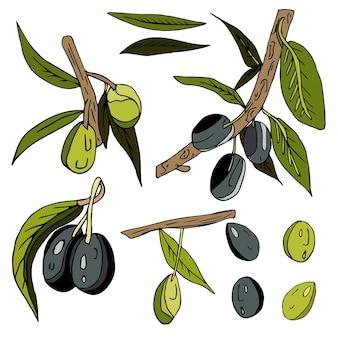 孤立した白い背景の上のオリーブ、小枝、葉、果物のセットです。黒と緑のオリーブ
