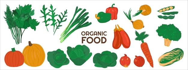有機食用野菜のイラストのセット
