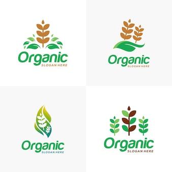 유기농 밀 곡물 농업 로고 밀 로고 기호 또는 아이콘 템플릿 집합