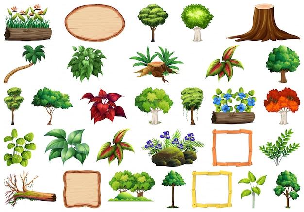 観賞用植物のセット 無料ベクター