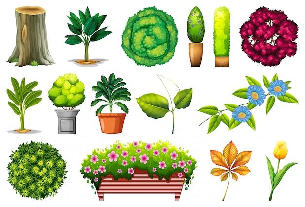 관 상용 식물의 세트
