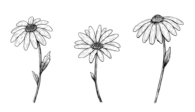 白で隔離のアウトラインデイジーの花のセット