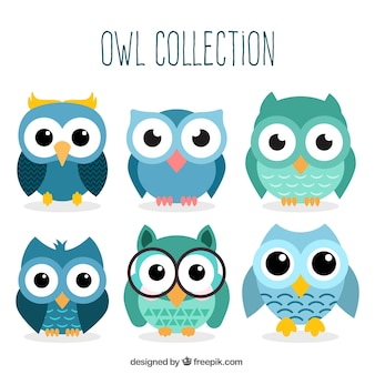Set Of Owl Characters