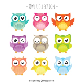 Set of owls with large eyes in flat design