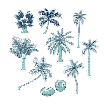 手のひらのセット。さまざまな種類の熱帯の木とココナッツ。輪郭スケッチイラスト