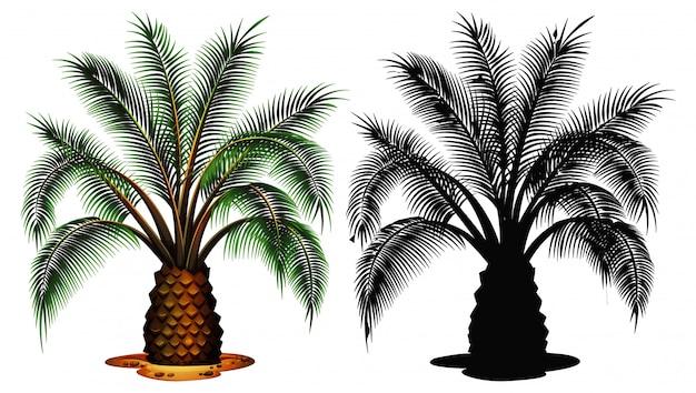 Набор пальмы