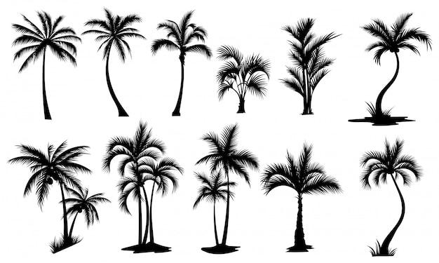 ヤシの木のセット。ヤシの木のシルエットのコレクション。熱帯植物の輪郭。