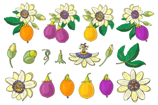 Passionflower passiflora, 보라색, 보라색, 흰색 바탕에 노란색 열 대 과일의 집합입니다. 이국적인 꽃, 꽃 봉 오리와 잎입니다. 인쇄 섬유, 직물, 포장지에 대 한 여름 그림.