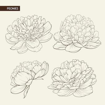 Набор цветочных элементов пиона.