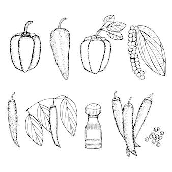 Набор перца, паприки, рамиро, перца чили и черного перца, векторные иллюстрации, эскиз чертежа руки