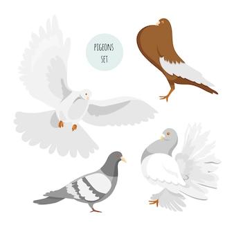 Набор голубей разных пород. изолированные