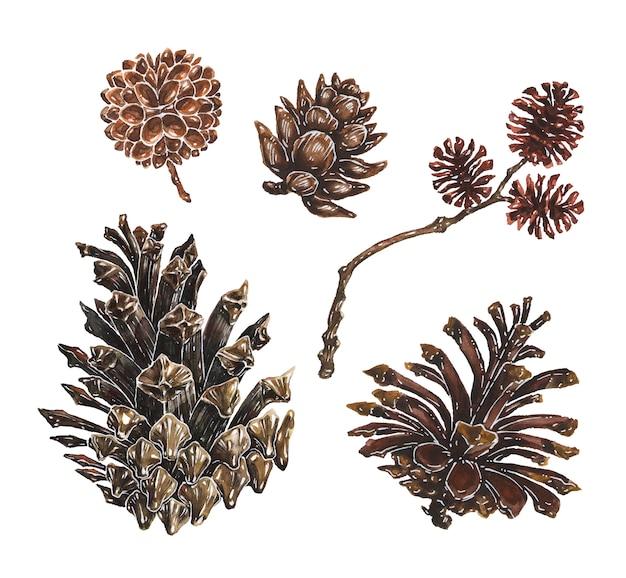 Набор сосновых и лиственничных шишек с отраслевыми акварельными иллюстрациями
