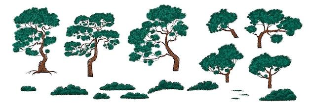 중국 스타일의 소나무와 덤불 세트