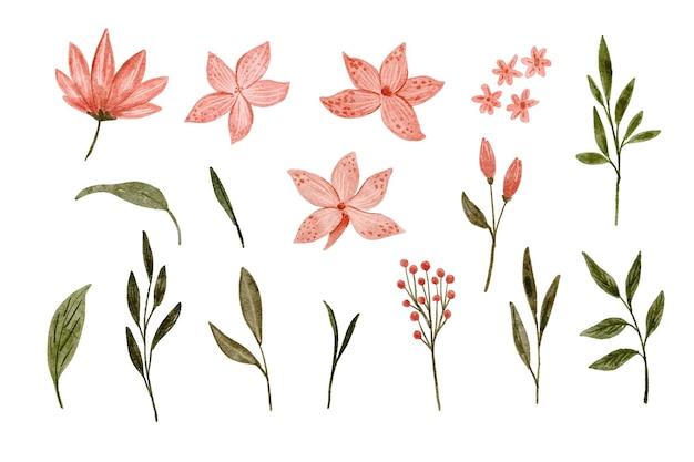 ピンクのカナユリの花水彩画のセット