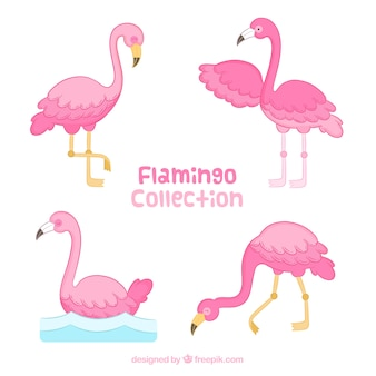 Set of pink flamingos in hand drawn style