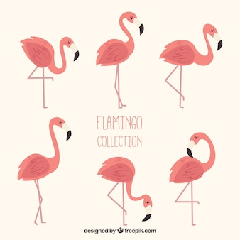 Set of pink flamingos with different poses