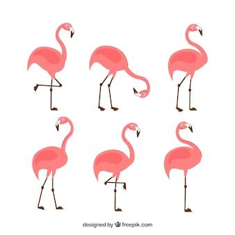 Набор розовых фламинго с разными позами