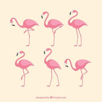 다른 포즈와 핑크 플라밍고 세트
