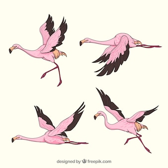 Set of pink flamingos with different postures