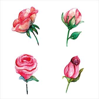 핑크 장미 꽃 봉오리 세트