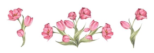 Набор розовых тюльпанов и листьев. букет тюльпанов. цветочная композиция. акварельная иллюстрация.