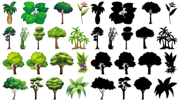 Набор растений и дерева с его силуэтом