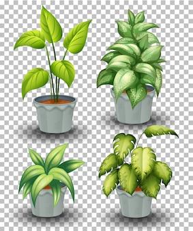 透明な背景に鍋に植物のセット