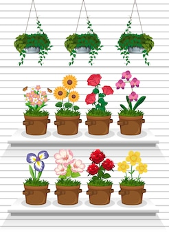 棚の上の植物のセット