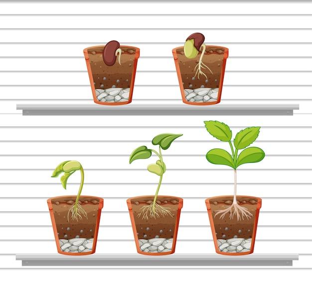 선반에 식물 세트