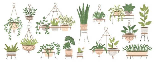 Набор растений в подвесных горшках и горшках на подставках в домашних джунглях