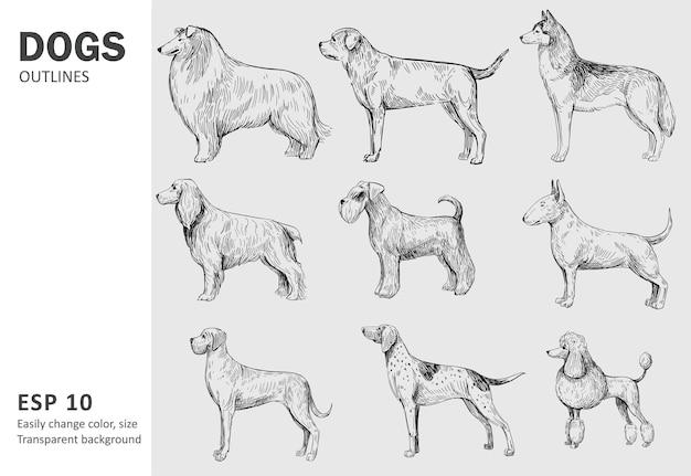 犬の人気のある品種のセット。白で隔離手描きイラスト