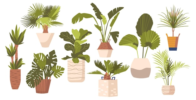 Набор горшечных пальм фикус, монстера, банан и драцена, домашние растения в современных цветочных горшках. тропические декоративные пальмы в горшках, изолированные элементы графического дизайна. векторные иллюстрации, значки