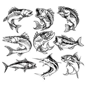 Набор хищных рыб иллюстрации