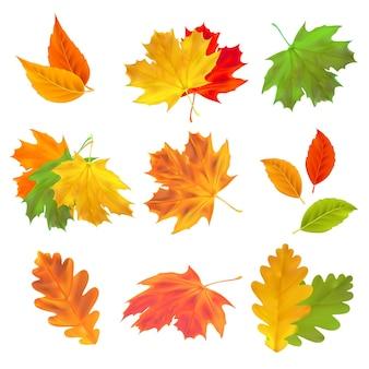 현실적인 단풍 세트 디자인을 위한 벡터 메이플 오크와 자작나무 잎