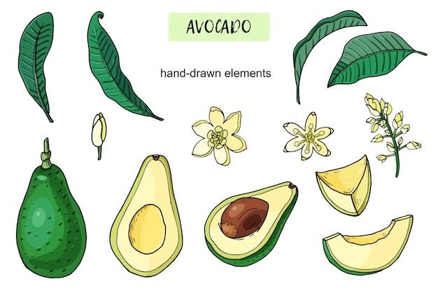 Набор реалистичных авокадо. летняя тропическая еда для здорового образа жизни. мультфильм целые фрукты, половина, лист, цветок. рисованной иллюстрации. природные органические овощи. эскиз на белом фоне.