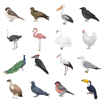 Набор реалистичных птиц